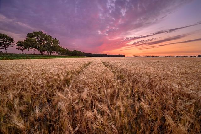 A summer field