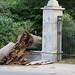 Parkwood Fence damage by tree Aug 19 2018