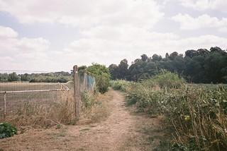 Shirehampton Footpath (scorched grass) | by knautia