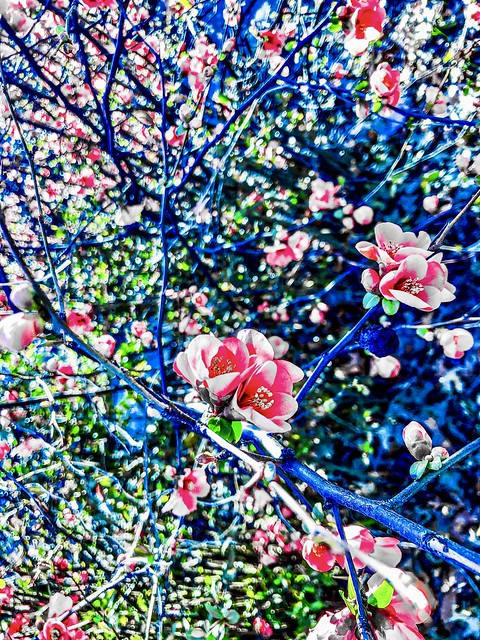"""""""Ten days of perfect tunes 🎶 The colors red and blue"""" ―The Knife 🌸"""