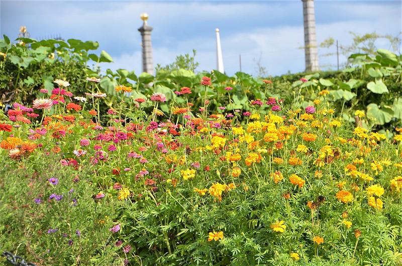 Flowerbed 24.08 (1)