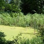 Tümpel mit Vegetation in der Heisinger Aue