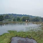 Überschwemmte Wiese im Naturschutzgebiet Heisinger Ruhraue