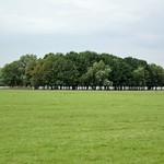 Baumgruppe im Deichvorland der Walsumer Rheinaue