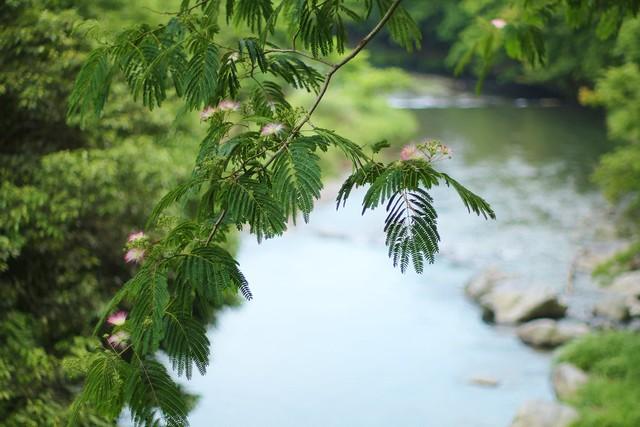 summer river - Takano River , Kyoto Yase