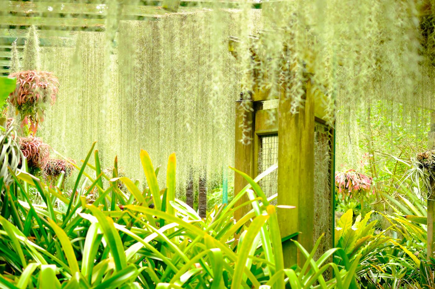 xf60mm f2.4 r macroの作例 レビュー 解像力 風景 シンガポール 植物