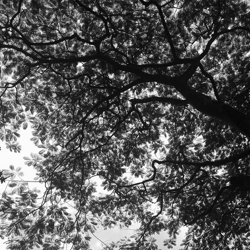 blackandwhite tree nature bnw abstract
