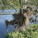 Überbleibsel des Sommerhochwassers aus dem Jahr 2007 in der Heisinger Ruhraue