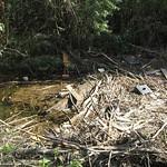 Angeschwemmter Müll und abgerissene Äste im Ruhr-Altwasser in der Heisinger Ruhraue