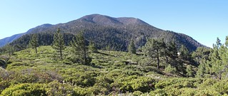 292 San Bernardino Peak from Manzanita Flat | by _JFR_