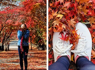 autun_leaves_korea | by Sammdaysoon