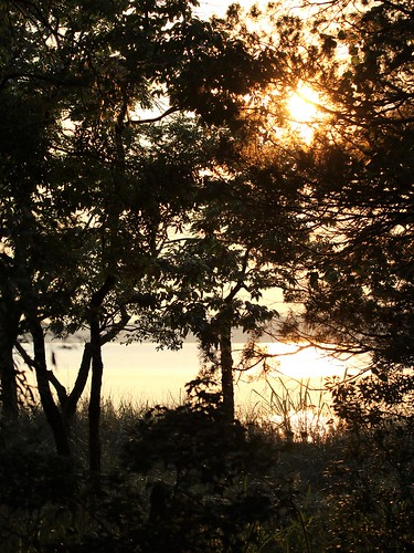 potomac river warm sun leaves reeds exquisitesunsets sunset trees evening calm