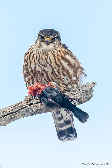 So I eat birds, get over it...