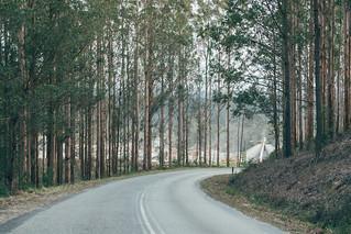 Knynsa Forest 2/2   by Ryan Jarrett 4130