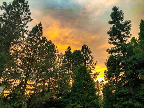 altasierra trees iphonex smoke iphone sky overcast shotoniphone sunset