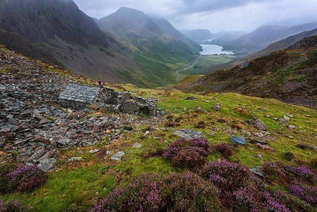 Mountain heather, wet weather