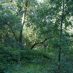 Schattiger Auwald in Kocks Loch