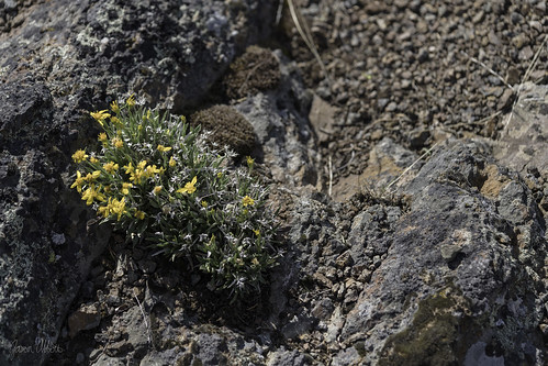 Rock garden | by Trail Image
