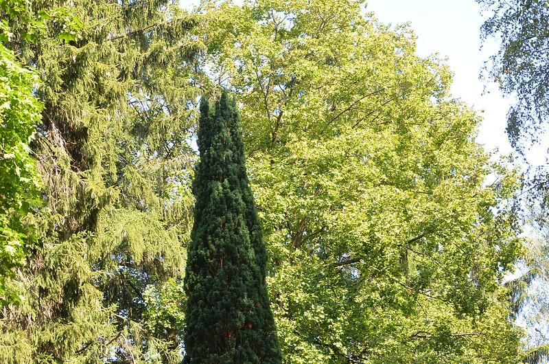Trees 15.08 (5)