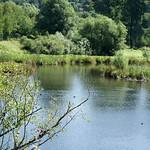 Teich in der Heisinger Ruhraue, Nähe Wuppertaler Straße