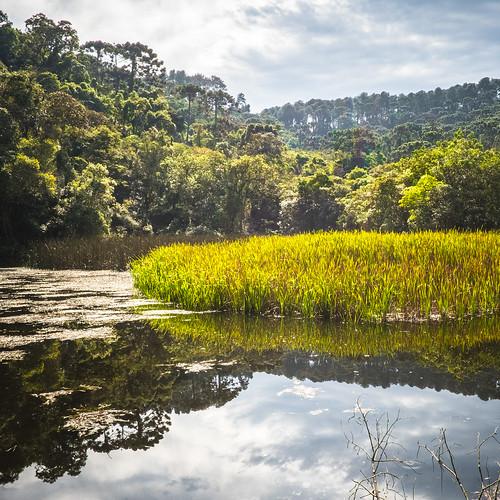 brazil flowersplants hiking landscape mariporã montanhismo nature natureza parqueestadualdacantareira reserve sp wildlife winter sãopaulo br diversity ecology ecosystem conservation