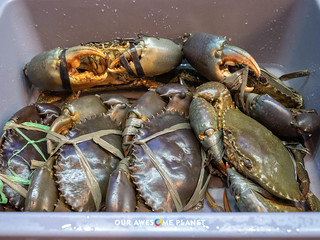 Seascape Market-150.jpg | by OURAWESOMEPLANET: PHILS #1 FOOD AND TRAVEL BLOG