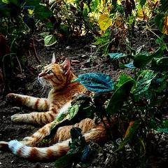 Oreste in the jungle