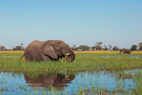 Today is World Elephant Day   by mclcbooks