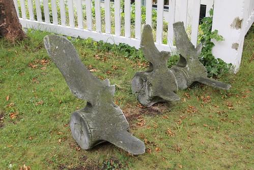 Ålesunds Museum - whale bones