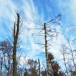 Sturmschäden im Schellenberger Wald