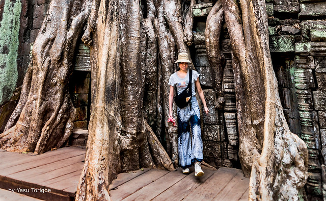 Giant Roots Integrated with a Structure in Ta Prohm Temple, Cambodiax-32a