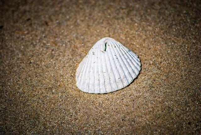 Seashell with a Hole
