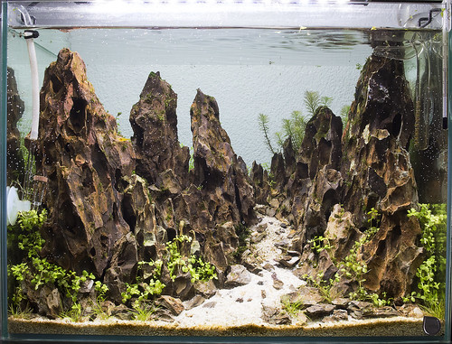 mountain nigel vivarium fts day 11   by nigel_kh