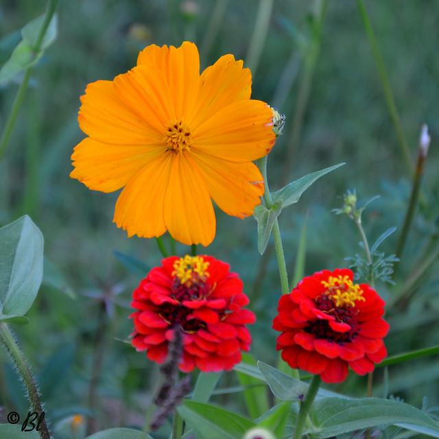 dans le parterre fleuri