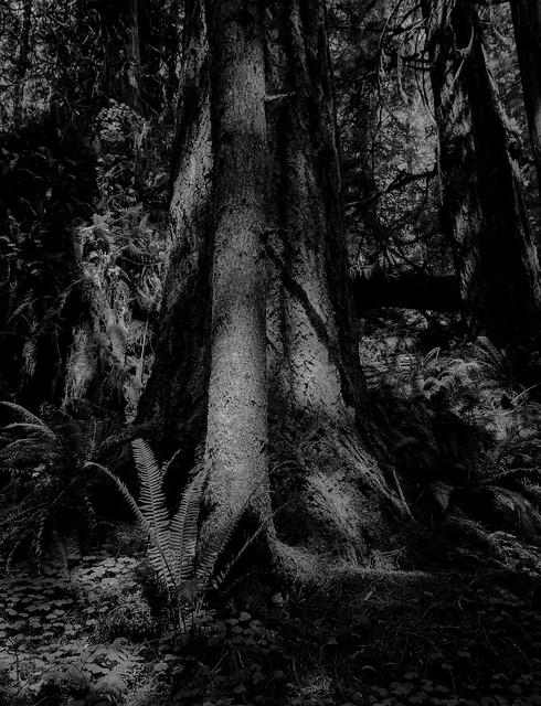 Big Cedar Tree Trail-4
