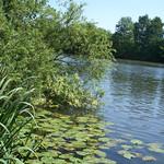 Das Ufer der Ruhr in der Heisinger Ruhraue