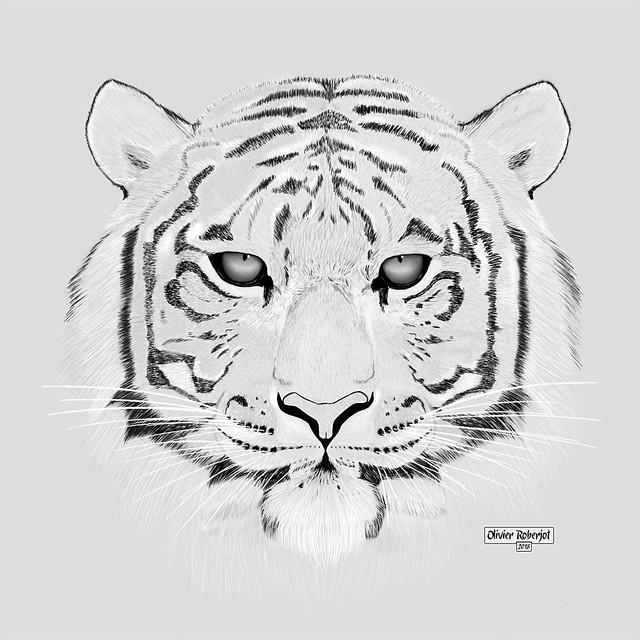Tigre 2b © Olivier Roberjot