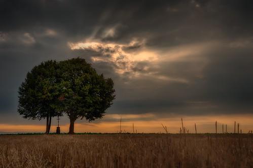 gäuboden niederbayern bavaria sunrise trees hdr wheatfield straubing regensburg clouds