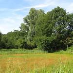 Offene Fläche an der Grenze des NSG Heisinger Bogen