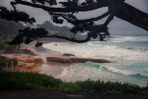 kiltro carmelbythesea carmel california usa árbol tree playa beach sea mar ocean océano sand arena agua water cypress winter surfer color