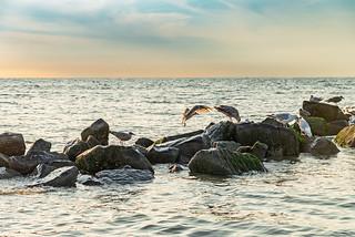Möwen auf Wellenbrecher
