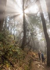 Magic forest. National park Langtang, Nepal.