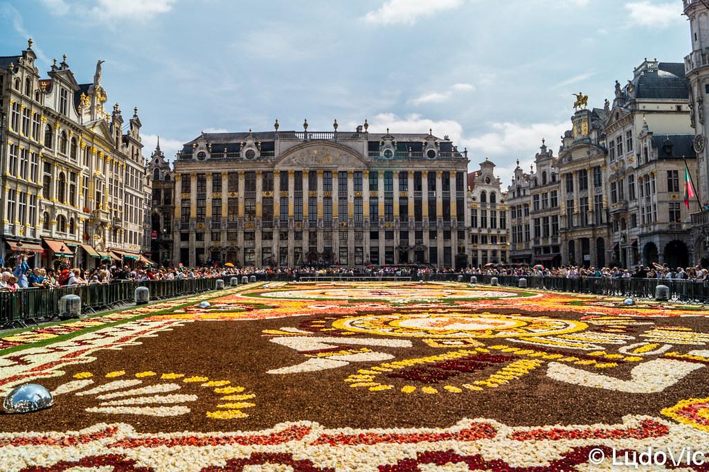 Tapis De Fleur 2018 Bruxelles Www Facebook Com 79milu Flickr
