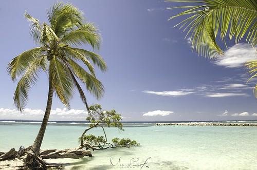 paradise paradis guadeloupe antilles plage color couleurs lagon sainteanne instagram beach island french ocean landscape mer sea paysage nikon nikkor sunset sunrise soleil sky