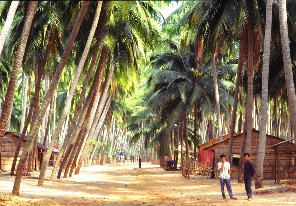 viet_centre_184 : à l'ombre des cocotiers au Vietnam Centre