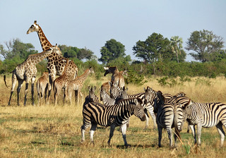 botswana-safari-review | by quirkytravelguy