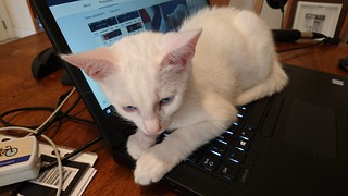 Learning touch typing