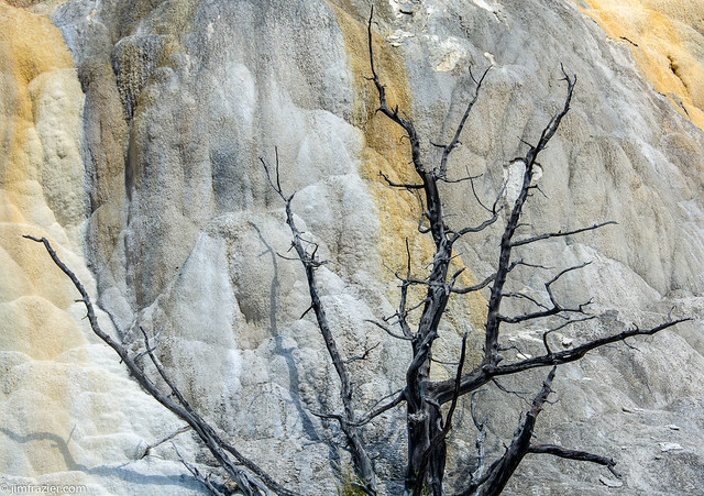 Travertine and Tree II