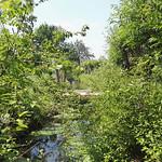 Bachlauf am Holunderweg in der Saarn-Mendener Aue