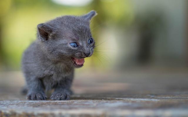 kittens II (02)
